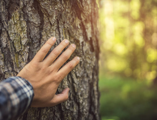 Earth Day Exposé:  How the Industrial Wood Industry Practices Good Environmental Stewardship