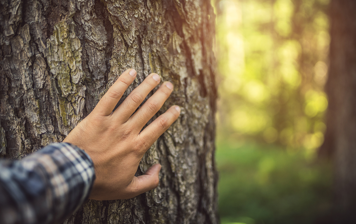 Earth Day - Industrial Wood Industry